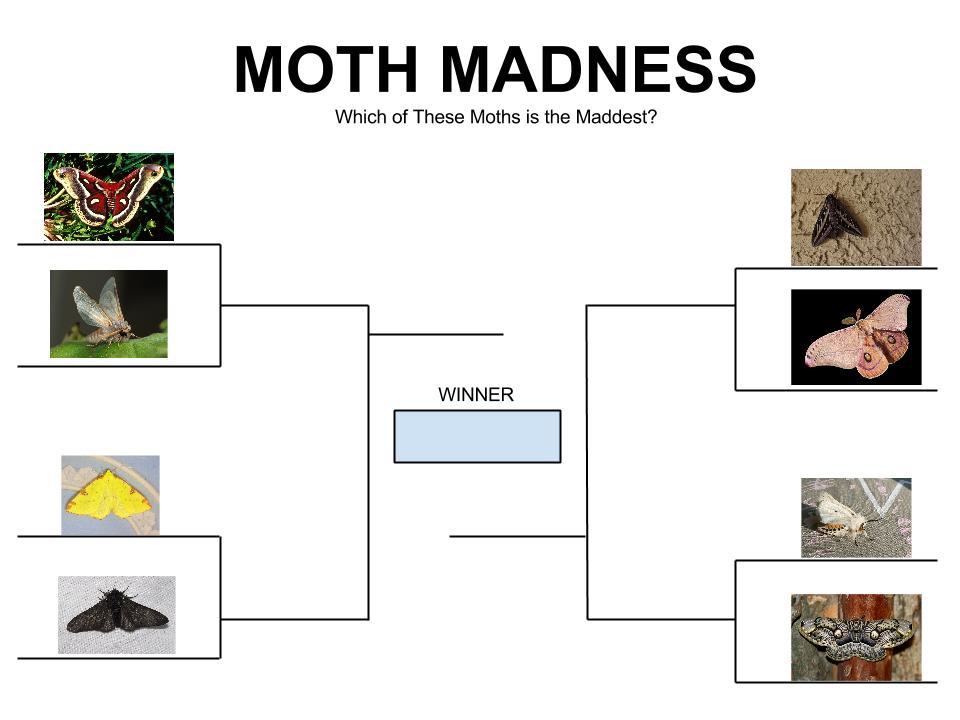Moth Madness Bracket