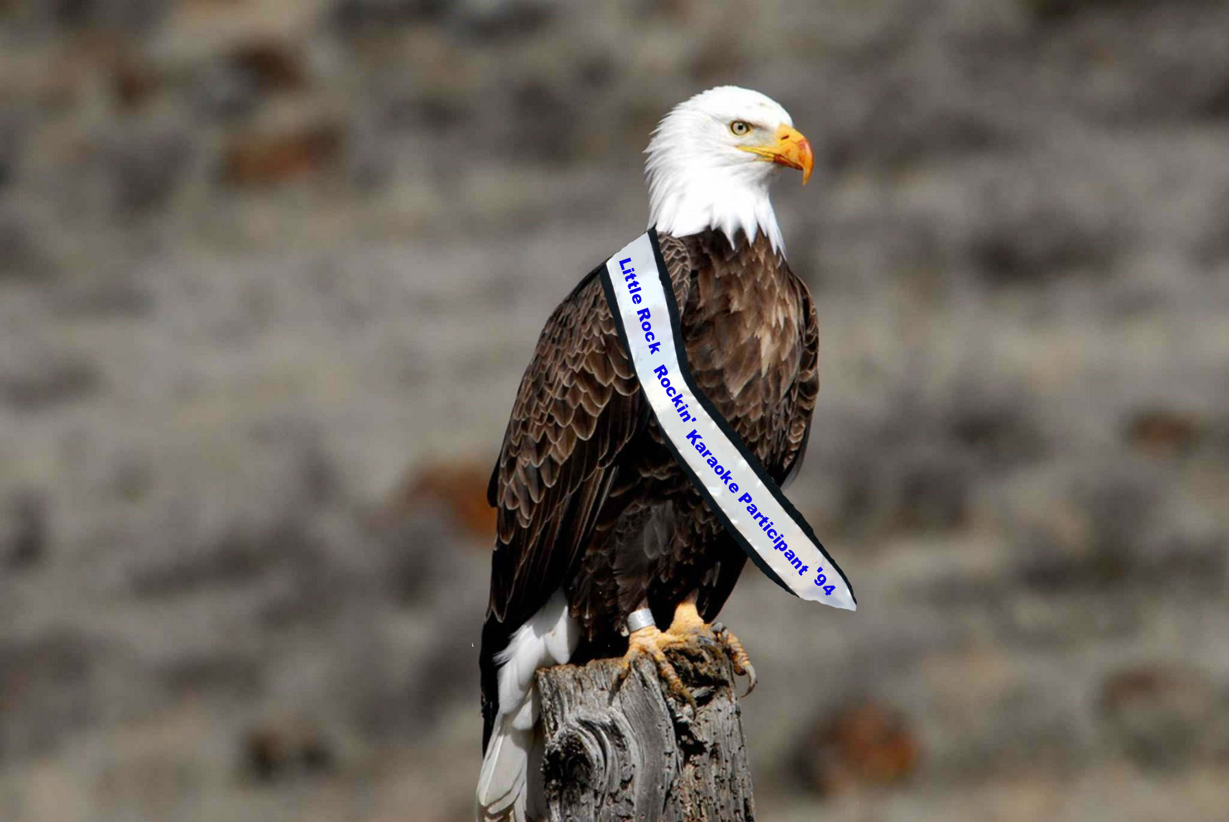 How Did This Bald Eagle Get Snubbed For The ESPN Courage Award ...