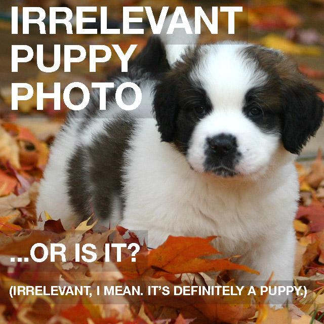 irrelevant puppy pic